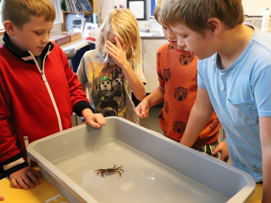 Der var mere tilbageholdenhed da der kom krabber i vandet