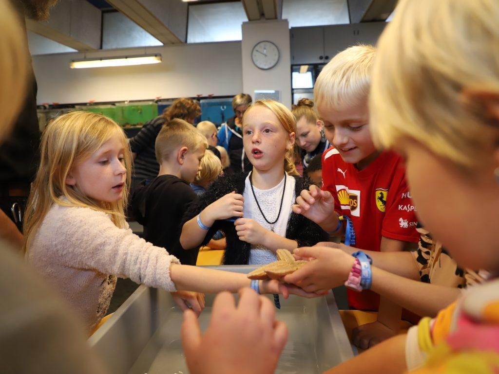 Stor interesse for søstjernerne blandt eleverne